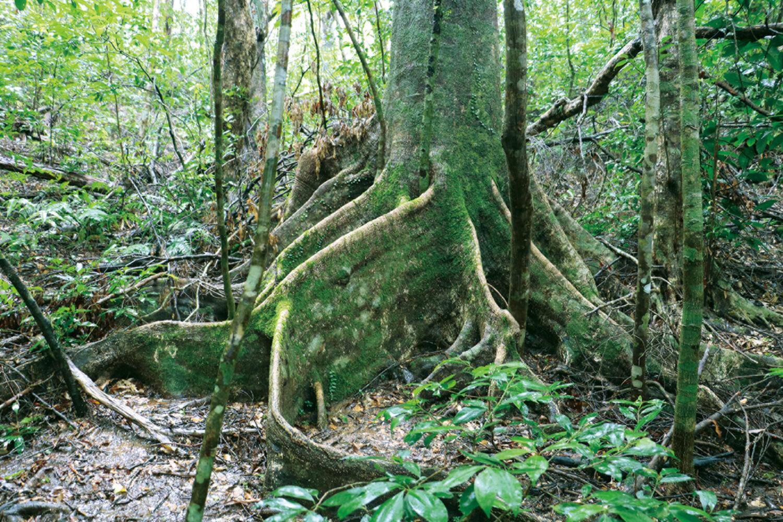 「ぱしふぃっくびいなす」 ふれんどしっぷと奄美の原生林の愉しみ